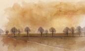Ağaçların Öyküsü