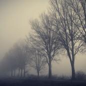 Sıralı Ağaçlar