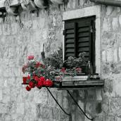 Çiçekli Pencere