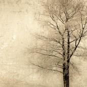 Hüzünlü Ağaç 2