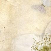 Kelebekler ve Taç Yaprakları