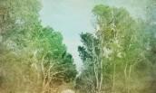 Rüya Ormanı