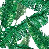 Palmiye Yapraklar
