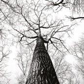 Sonbaharda Ağaç