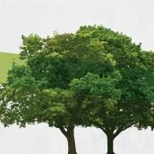 Büyük Ağaçlar