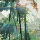 Tropikal İklim